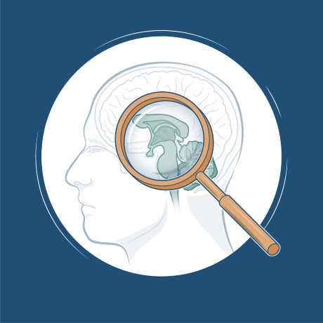 Illustration of a magnifying glass and a human brain