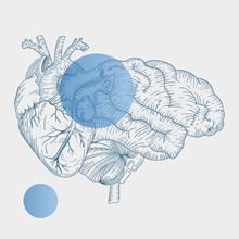 Illustration of a brain overlaid with a semi-transparent blue circle.